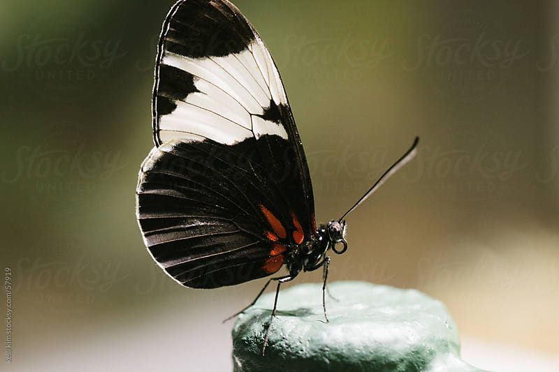 Closeup Image Of Orange And Black Butterfly by Kelli Seeger Kim for Stocksy United