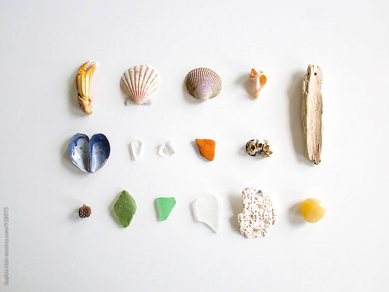 Neatly Organized Shells by Sophia Hsin for Stocksy United