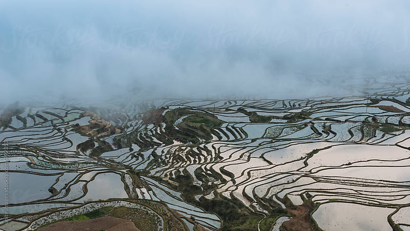 terraced fields by unite images for Stocksy United