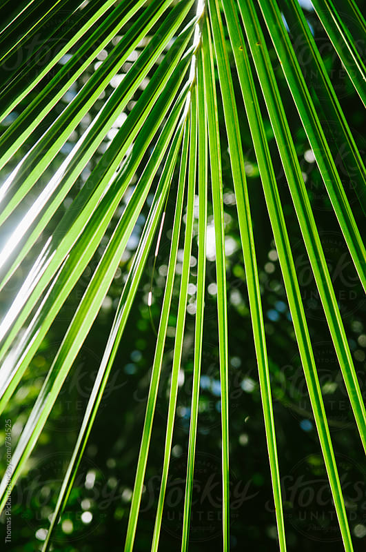 Sunlight and palm frond, Samoa. by Thomas Pickard for Stocksy United