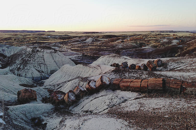 Petrified Log by Kevin Russ for Stocksy United