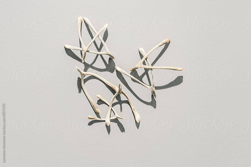 Collection of Superstitious Wishes, Bird Wishbones by suzanne clements for Stocksy United