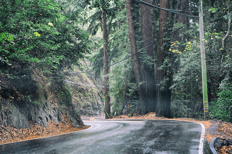 Foggy mountain road through the Redwoods by Monica Murphy for Stocksy United