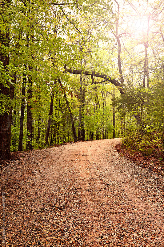 Sunlit Wooded Dirt Road in Arkansas by Brandon Alms for Stocksy United