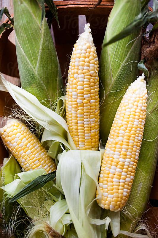 Corn by Mental Art + Design for Stocksy United