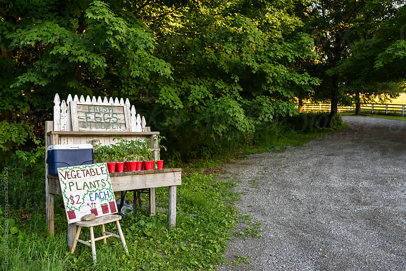 roadside stand selling eggs and tomato plants by Deirdre Malfatto for Stocksy United