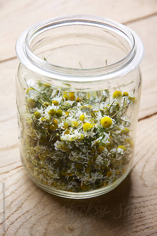 Dried chamomile by Harald Walker for Stocksy United