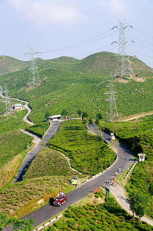 View of winding roads through a tea garden in the hills by Saptak Ganguly for Stocksy United