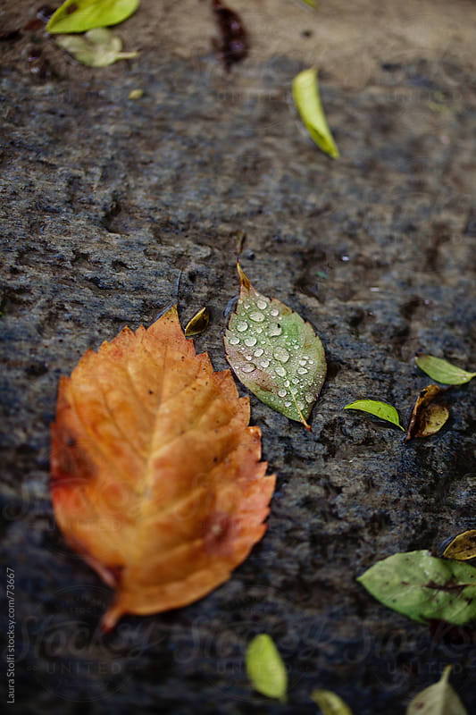 Rain drops on fallen leaves on wet stone ground by Laura Stolfi for Stocksy United