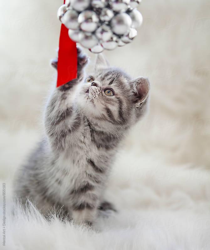 Christmas Kitten by Mental Art + Design for Stocksy United