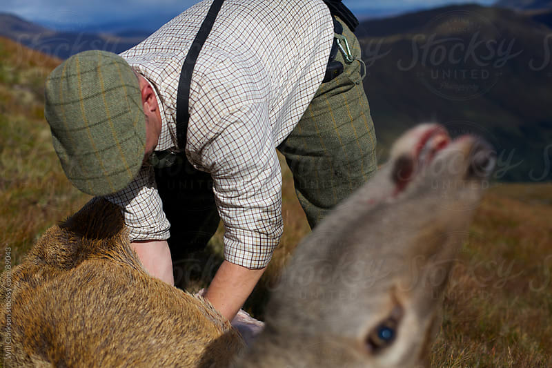 A stalker gutting a stag with the head in the foreground  by Will Clarkson for Stocksy United