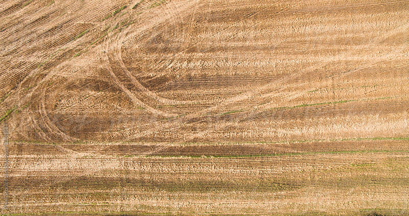 Harvested wheat field by Pixel Stories for Stocksy United