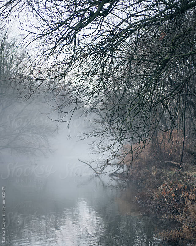 Foggy winter day by the creekside by Kathryn Swayze for Stocksy United