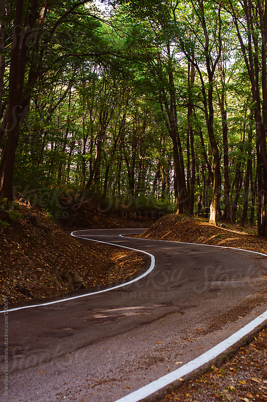 Asphalt Road Through the Woods by Branislav Jovanović for Stocksy United