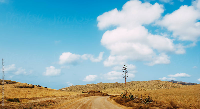 Summer landscape of el Cabo de Gata, Almeria. Spain. by BONNINSTUDIO for Stocksy United