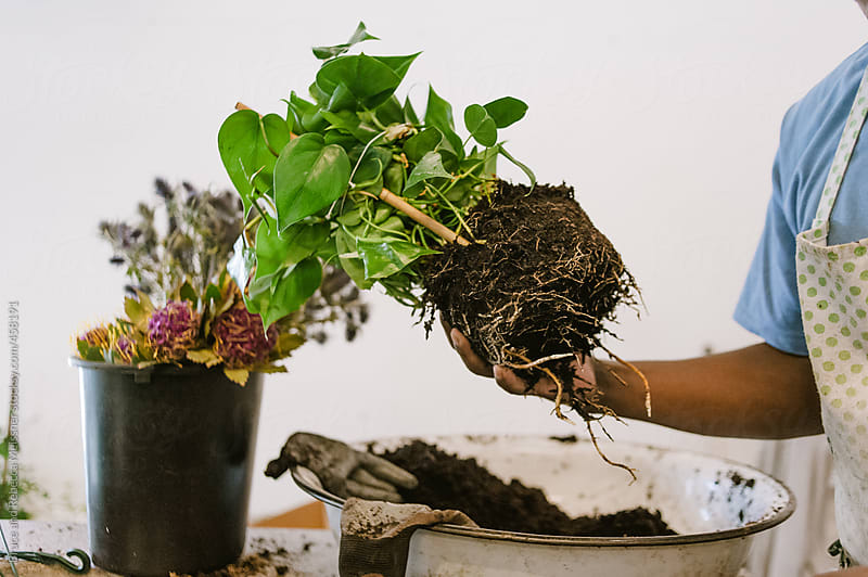 Making a hanging plant by Bruce and Rebecca Meissner for Stocksy United