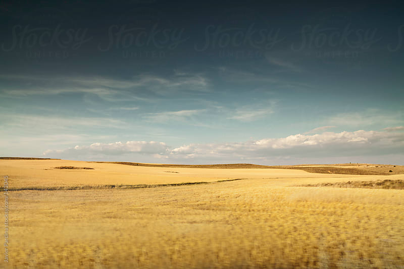 corn fields at sunset by Javier Pardina for Stocksy United