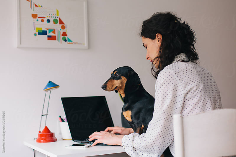 Woman working on a laptop and holding her small dog on her lap by VeaVea for Stocksy United