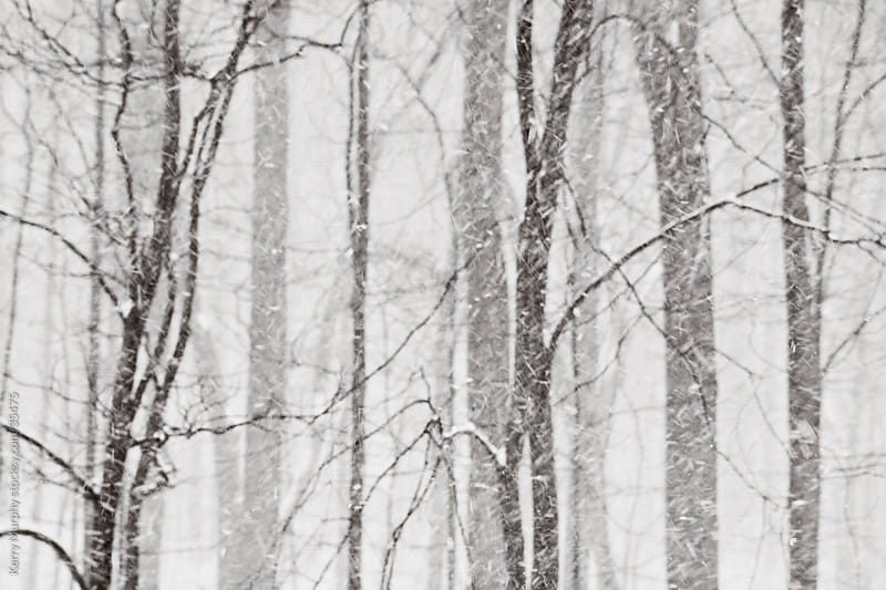 Snow falling in the woods in winter by Kerry Murphy for Stocksy United