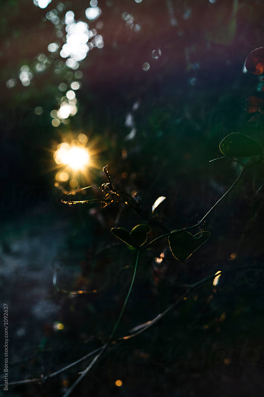 Conceptual, dark photo of nature with a little light like hope by Beatrix Boros for Stocksy United