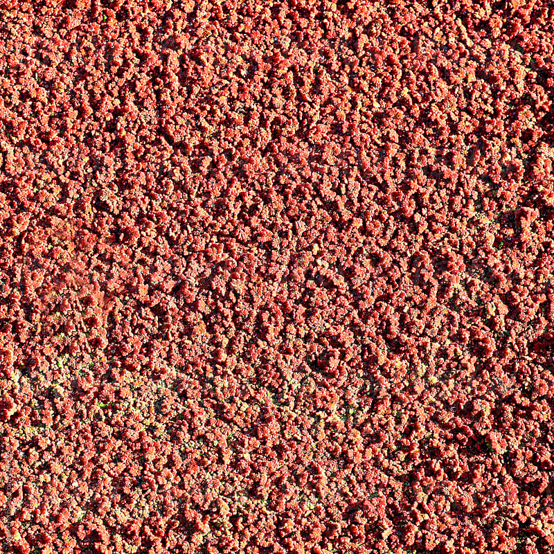 Red algae on the surface of a ditch by Marcel for Stocksy United