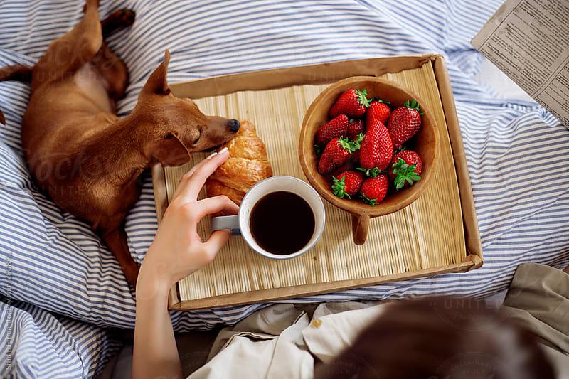 Breakfast in bed by Studio Firma for Stocksy United