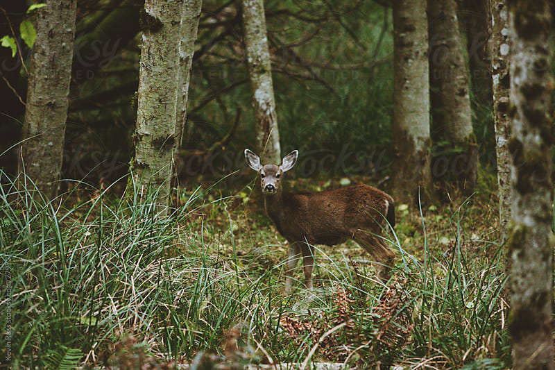 Dark Forest Deer by Kevin Russ for Stocksy United