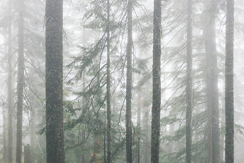 Forest in dense fog by Paul Edmondson for Stocksy United
