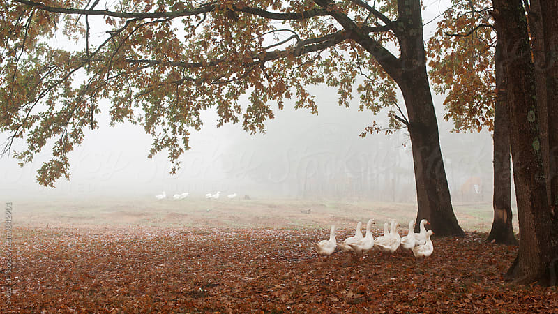Autumn landscape with geese by Svetlana Shchemeleva for Stocksy United