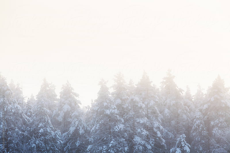 A tree line on a hazy winter morning by Jonatan Hedberg for Stocksy United