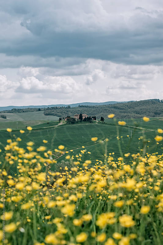 Typical Tuscan landscape with a farm in the countryside by Beatrix Boros for Stocksy United