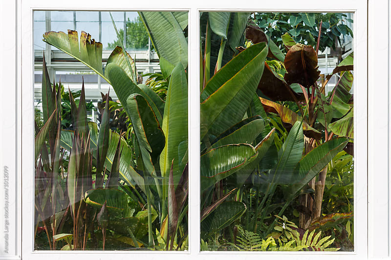 tropical greenhouse seen from outside by Amanda Large for Stocksy United