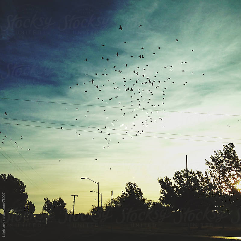 Birds Scatter Throughout The Sky at Dusk by Leigh Love for Stocksy United