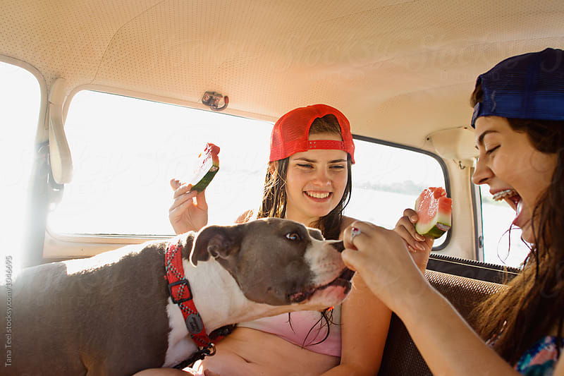 teenagers feed dog watermelon while sitting in car by Tana Teel for Stocksy United