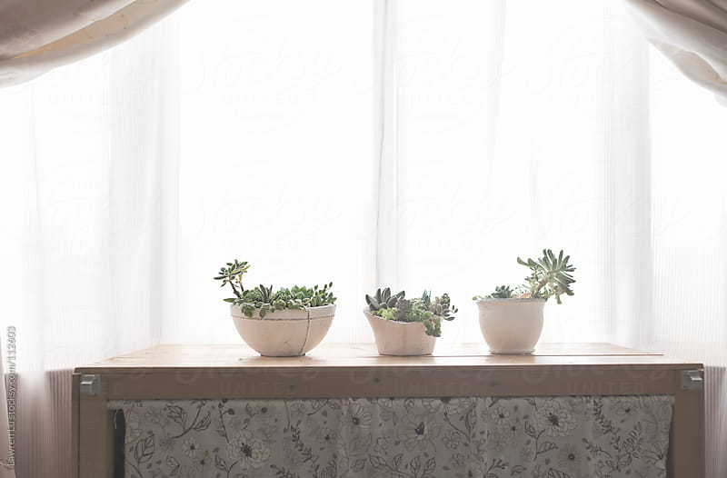 Small potted plants on case in room with natural sunshine from w by Lawren Lu for Stocksy United