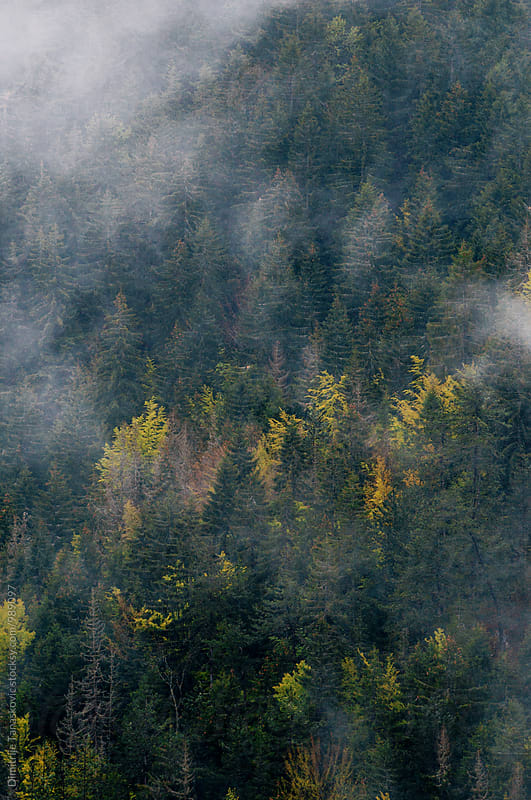Fog and forest up in the mountain by Dimitrije Tanaskovic for Stocksy United