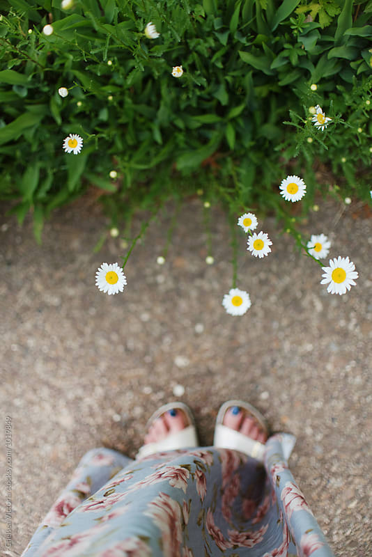 A womans feet and daisies from above by Chelsea Victoria for Stocksy United