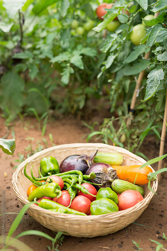 Fresh vegetables in a basket by Maa Hoo for Stocksy United