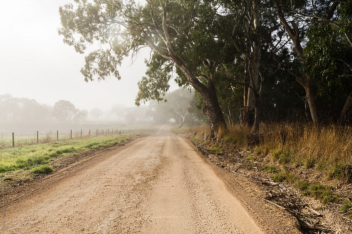 Foggy Country Roads With Gum Trees By Gillian Vann Road Stocksy United
