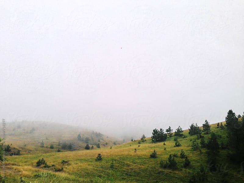 Mountain landscape in fog by Marko Milovanović for Stocksy United