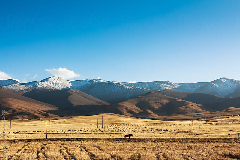 pastures beside Qinghai lake,China by zheng long for Stocksy United