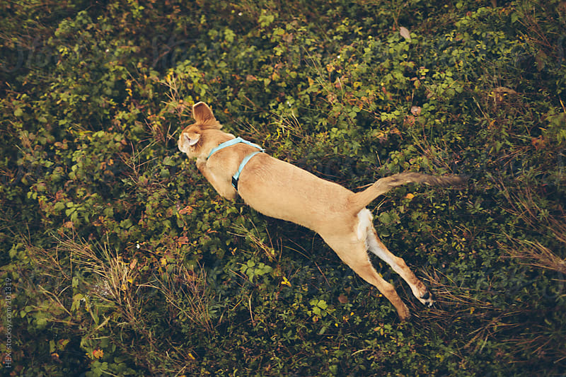 Young Dog Running Autumn by HEX. for Stocksy United