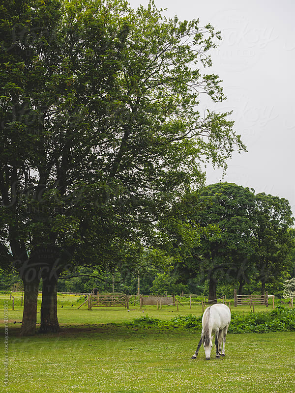 Horse in the field by Milena Milani for Stocksy United