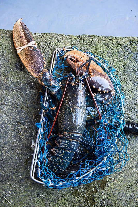 Lobster hatchery in Cantabria by Marta Muñoz-Calero Calderon for Stocksy United