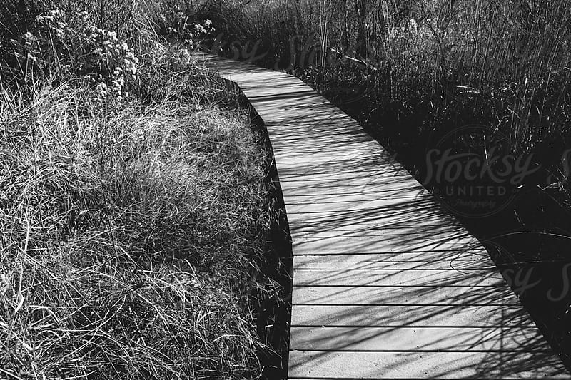 Boardwalk through tallgrass marsh, near Joshua Tree NP, CA, USA by Paul Edmondson for Stocksy United