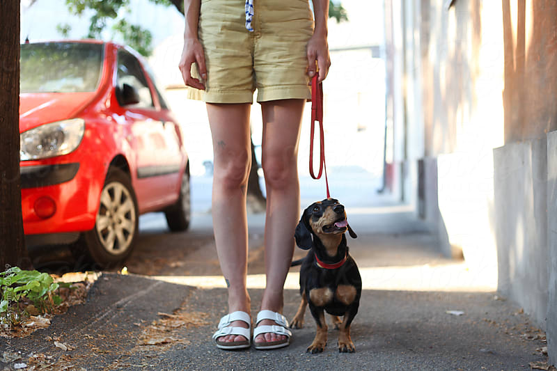 Cute small dachshund standing in front of female legs by Marija Mandic for Stocksy United