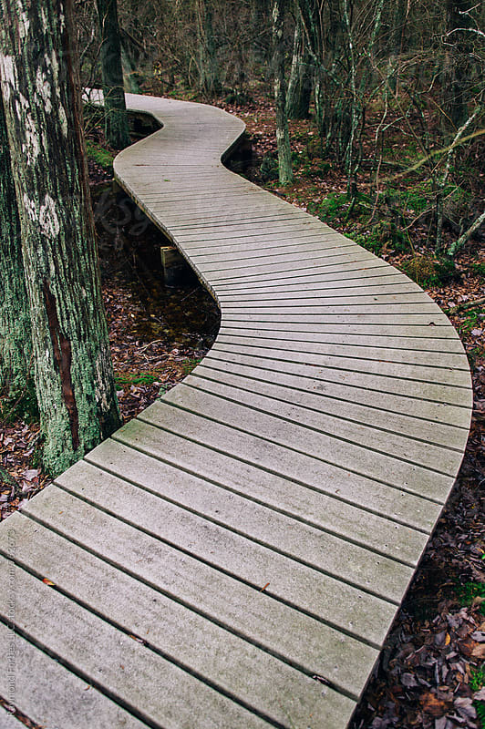 White Cedar Swamp Boardwalk by Raymond Forbes LLC for Stocksy United