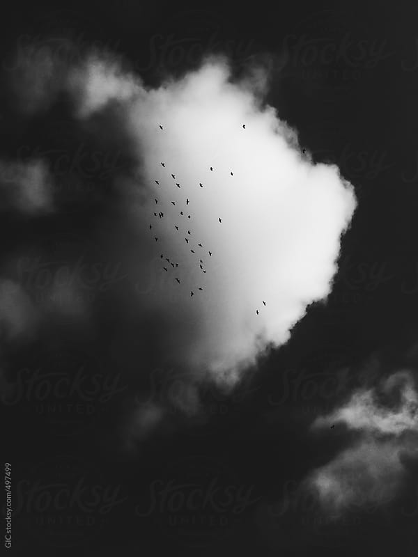 Flock of birds in the sky against a cloud by GIC for Stocksy United