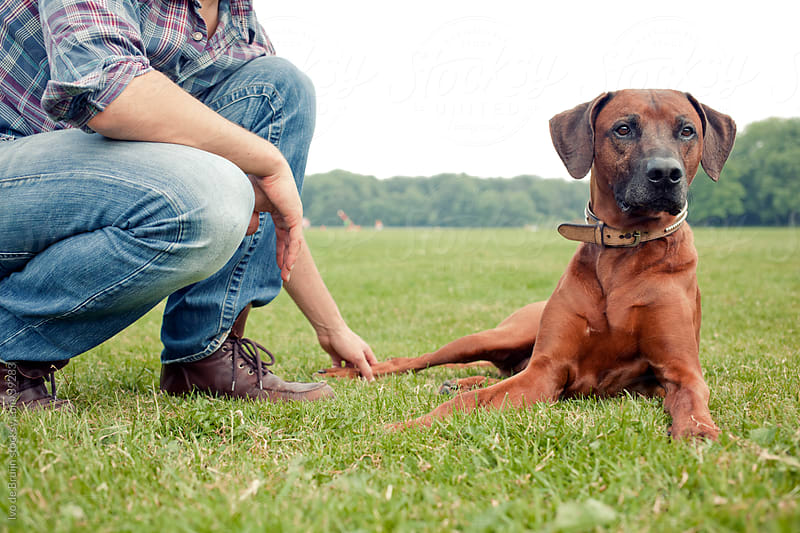 An owner sitting sitting next to his alert brown haired dog, while touching him by Ivo de Bruijn for Stocksy United