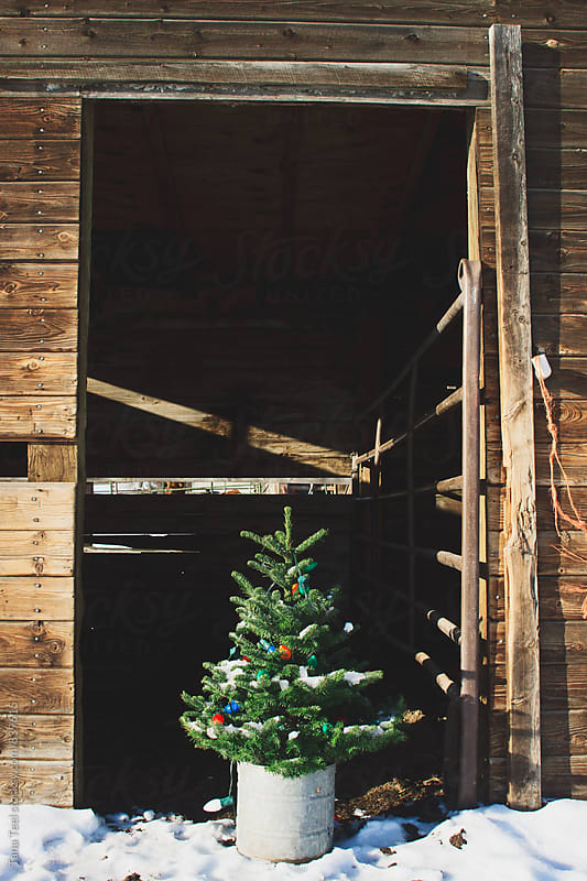 Christmas tree standing in barn doorway on winter day by Tana Teel for Stocksy United